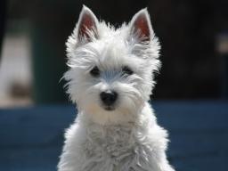 Webinar: Tierheilbehandlung  -  Hunde