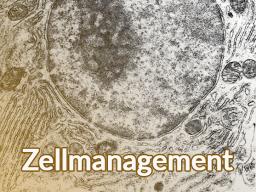 Webinar: Zellmanagement - So geht Gesundheit!