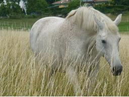 "Webinar: Kostenloses Webinar ""Tierkommunikation und Tier-Energetik"""