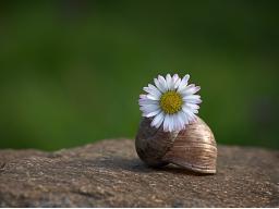 Webinar: Märchenwebinar Die Bienenkönigin- Anbindung an die Erde Teil 3