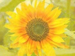 Webinar: ENGELheilung für Dich - SOMMER-Rabatt - 30 Min. Einzelberatung