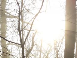 Webinar: Meditation zur Beruhigung und Entspannung