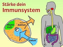 Webinar: Stärke dein Immunsystem