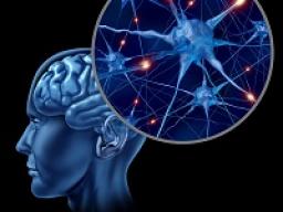 Webinar: Astromedizin 9.1.: Zentrales und peripheres Nervensystem