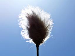 Webinar: Friedensenergie für deine Seele (spät-Webinar)