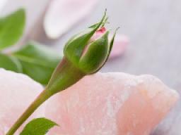 Webinar: Rosenquarz -  Dich selbst (wieder) lieben lernen!