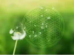 Webinar: Transformations- und Heilenergie