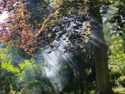 Webinar: Meditation zur Erhöhung des Friedenbewusstseins