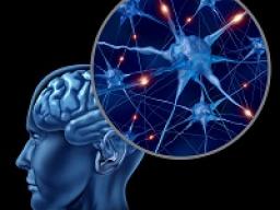 Webinar: Astromedizin 9.6.: Zentrales und peripheres Nervensystem