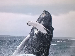 Webinar: Akademie Walgesang für Kinder - Einsamkeit