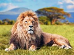 Webinar: Astrologie lernen * Der Löwe Aszendent