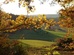 Webinar: Herbst - Element Metall - Zeit für Lunge und Dickdarm
