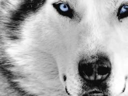 Webinar: Einzelbehandlung für dein Tier
