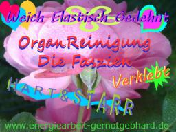 Webinar: OrganReinigung-BindeGewebe/Faszien