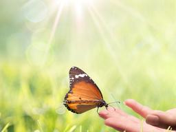 Webinar: Fernheilung/ remote healing mit amazinGRACE (R)