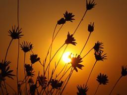 Webinar: Meditation zu Ostara - Ritual zur Verwirklichung von Zielen