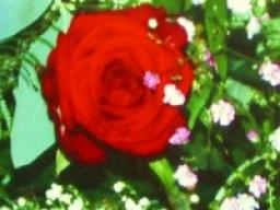 Webinar: Hat eure Liebe eine Chance? Kostenfreier Einzeltermin