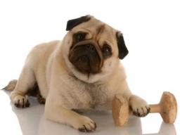 Webinar: Tierengel Reiki