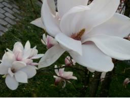 Webinar: Beratung zu Liebe, Beziehungen und Seelenpartnerschaft