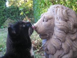 Webinar: Tierkommunikation- Fragen & Antworten