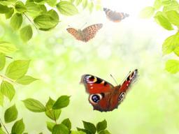 Webinar: Innere Weisheit entdecken - A&Q-Webinar