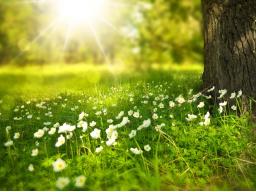 Webinar: Der grüne Heilstrahl - Channeling und Meditation mit Hilarion