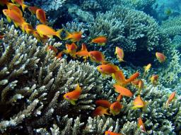 Webinar: In die Erfolgsenergie hinein kommen mit den Meeresbewohnern