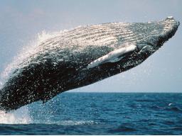 Webinar: Krafttierreise zur Selbstfindung / der Wal