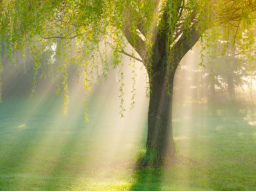 Webinar: Baum Meditation