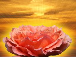 Webinar: Göttliche Tiefenreinigung - 3.Seelensitzung