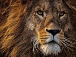 Webinar: 8.8. Löwenportal - Erwecke deine Kraft