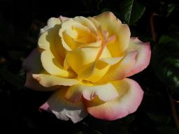 Webinar: Mit Maria Magdalena: Blütensegen in unserem Schöpfungsfeld