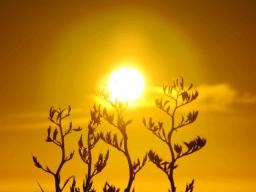 Webinar: Meditation: Verbindung mit dem Höheren Selbst und die Kraft des Lichtes