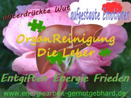 Webinar: OrganReinigung-Leber/Detoxen