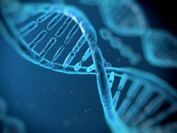 Webinar: ✩ DNA Lichtintegrativ Praktiker (Ausbildung/Einweihung) ✩ DNA Lightintegrative Practitioner ✩