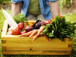 Webinar: Kinesiolgie als Selbsthilfeinstrument?! - Themenfokus: Ernährung Teil I