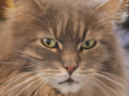 Webinar: Hunde  Katze  Radionik  Analyse