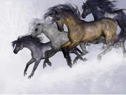 Webinar: Heilung für die Pferdeseele