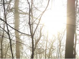 Webinar: Reise mit Deinen Engeln und Deinem Seelenrat in eine zukünftige Lebenszeit - 2 Std