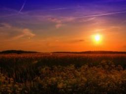 Webinar: Sonnwende / Fülle, Üppigkeit, Fruchtbarkeit - Neumond - Sonnenfinsternis