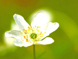 Webinar: NEU* Frühjahrserwachen*