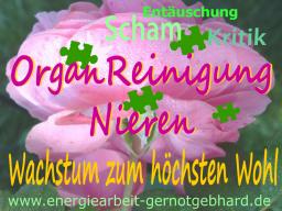 Webinar: Organreinigung-Die Nieren