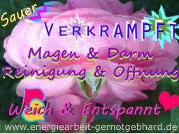 Webinar: OrganReinigung-Magen & Darm