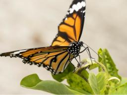 Webinar: Nutze dein Kraftfeld und finde innere Ruhe