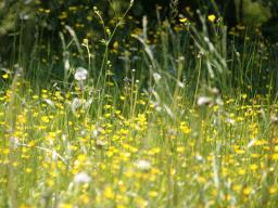 Webinar: Geleitet von Martin Wertsch Die energetische Sicht auf Allergien