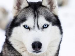 Webinar: Begegne deinem Krafttier - Reise in ein fernes Land