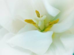 Webinar: Baue dich selbst wieder auf - Fluss der Selbstpflege Ferneinweihung