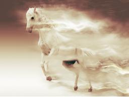 Webinar: Auf den Seelenflügeln der Pferde