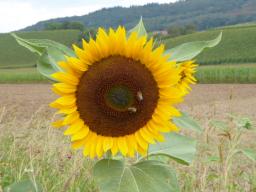 Webinar: Hochsommer - Element Erde - Zeit für Magen, Milz und Harmonie