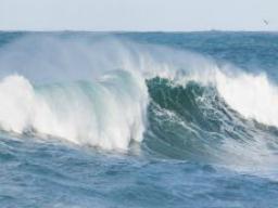 Webinar: Die Matrix-Welle bewegt - Ich bin selbstbewusst!
